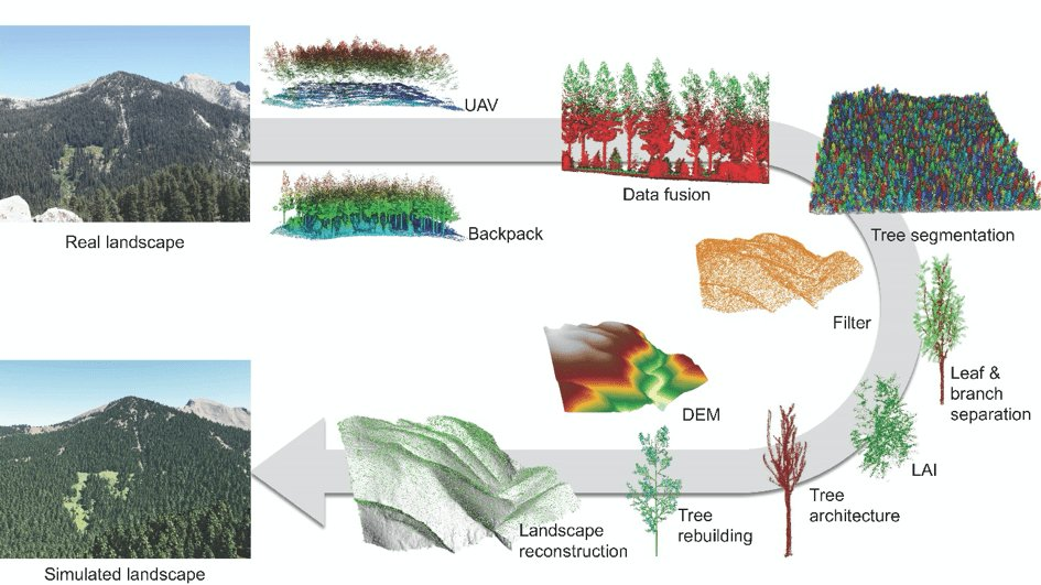 3D forest structure parameter extraction and upscaling