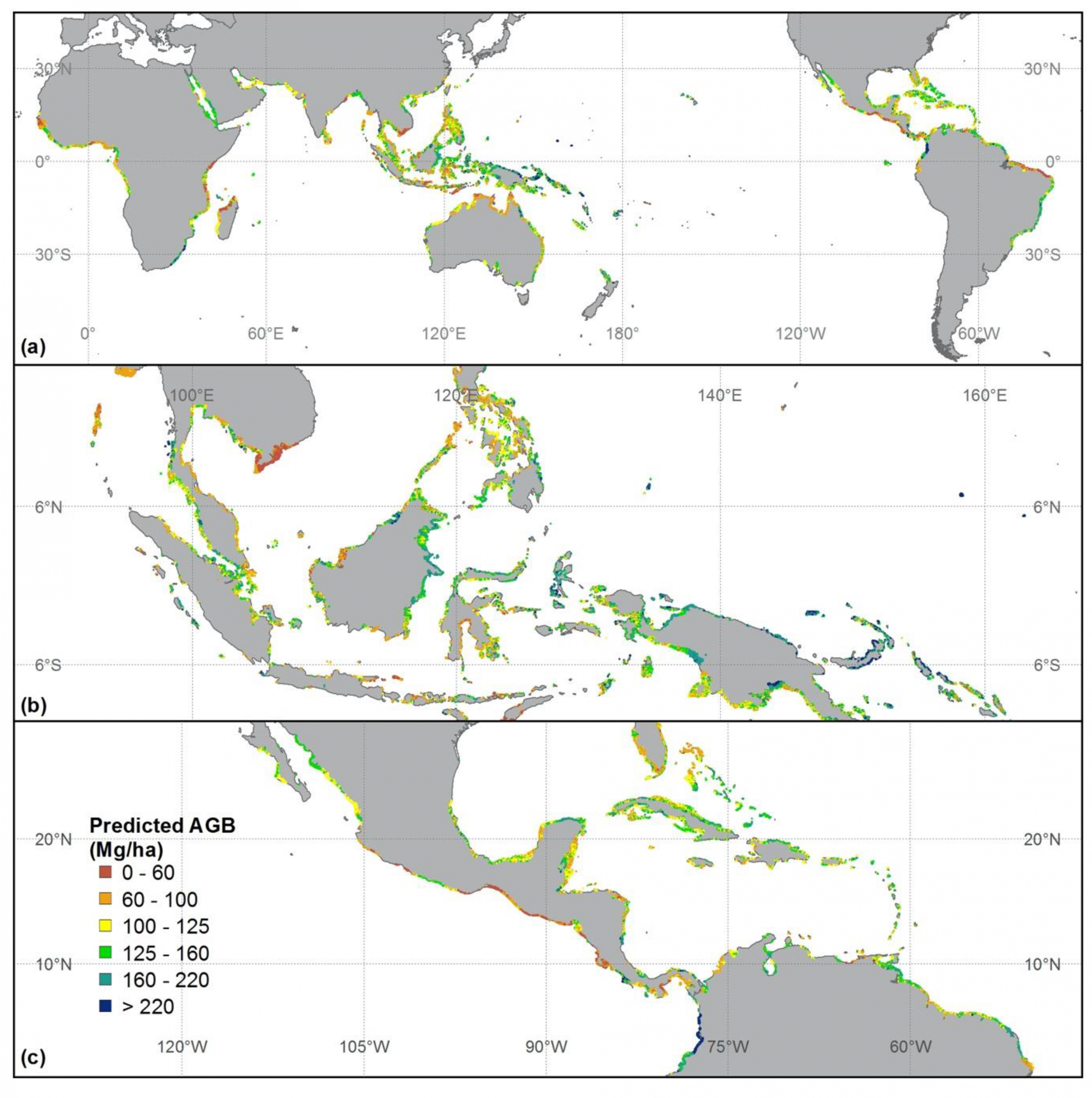 Global mangrove forest AGB map